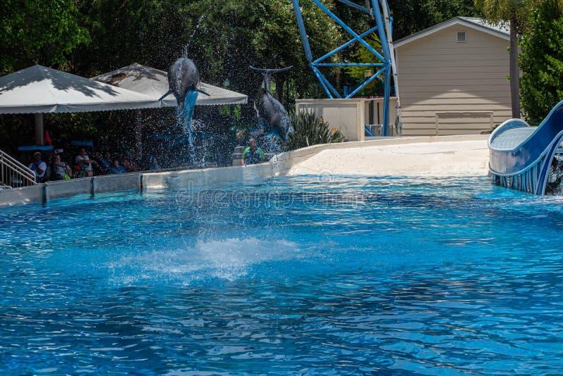 Os golfinhos espetaculares saltam no golfinho que os dias mostram em Seaworld 48 fotos de stock royalty free