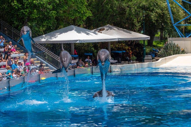Os golfinhos espetaculares saltam no golfinho que os dias mostram em Seaworld 47 imagens de stock royalty free