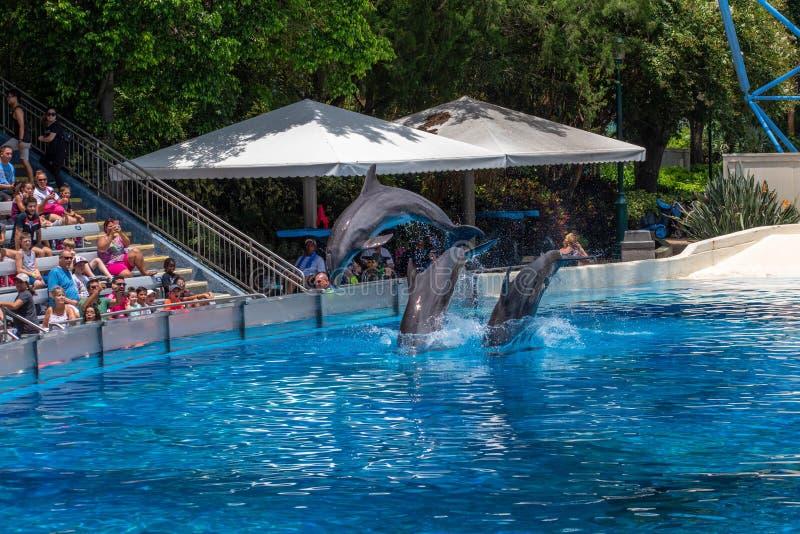 Os golfinhos espetaculares saltam no golfinho que os dias mostram em Seaworld 50 fotografia de stock