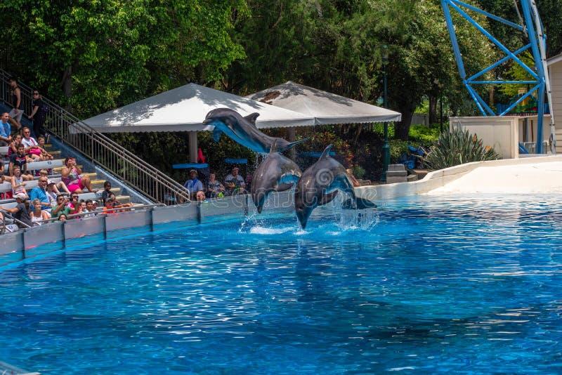 Os golfinhos espetaculares saltam no golfinho que os dias mostram em Seaworld 49 imagem de stock royalty free