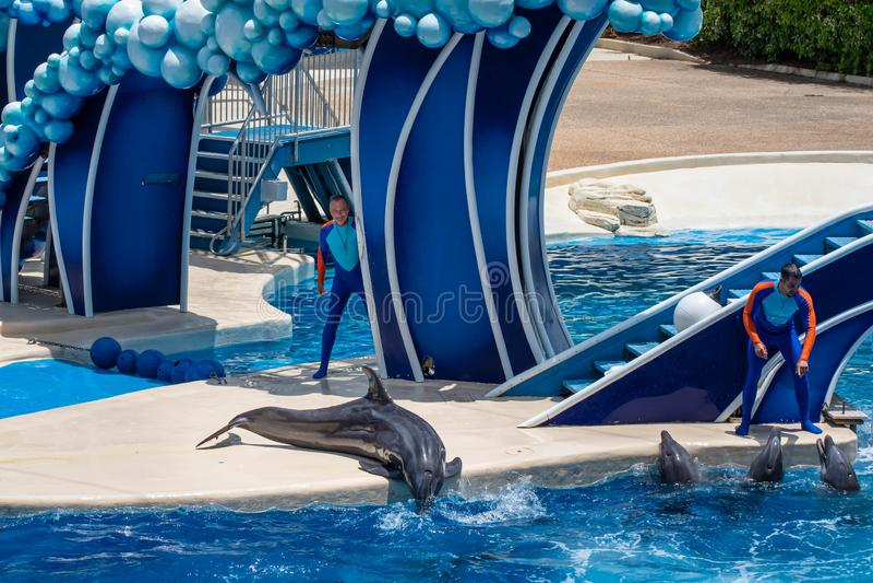 Os golfinhos que jogam em dias do golfinho mostram em Seaworld 2 imagem de stock royalty free