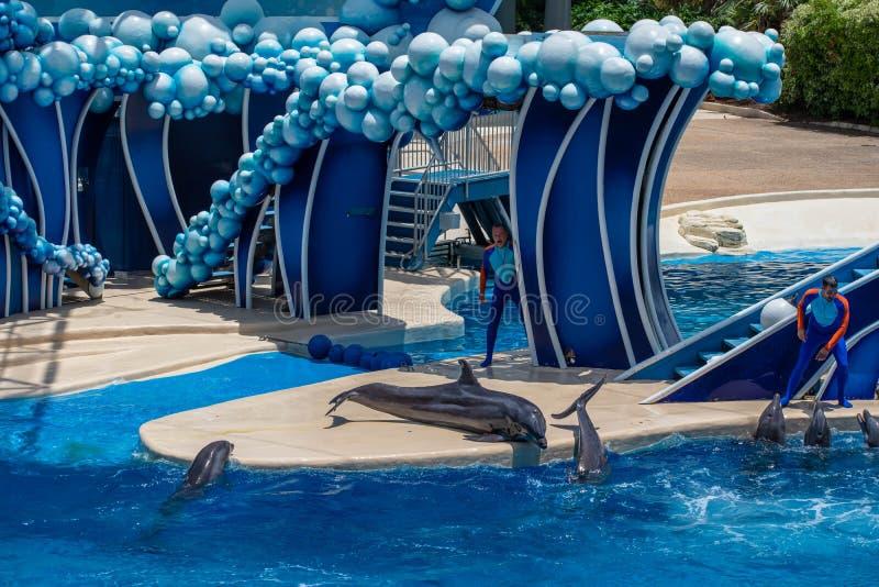Os golfinhos que jogam em dias do golfinho mostram em Seaworld 1 fotografia de stock