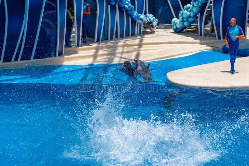 Os golfinhos que jogam em dias do golfinho mostram em Seaworld 3 fotos de stock royalty free