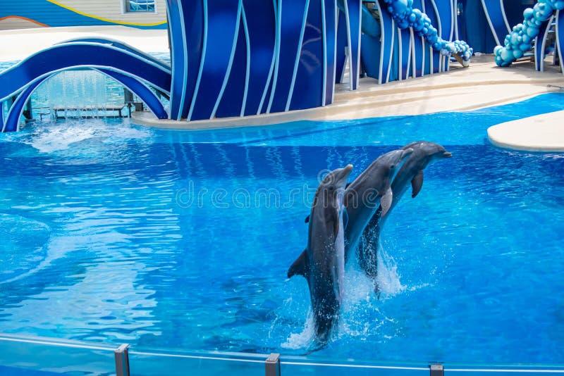 Os golfinhos que saltam em dias do golfinho mostram em Seaworld 4 fotografia de stock royalty free