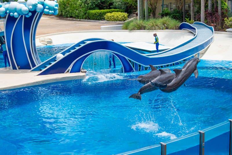 Os golfinhos que saltam em dias do golfinho mostram em Seaworld 2 foto de stock