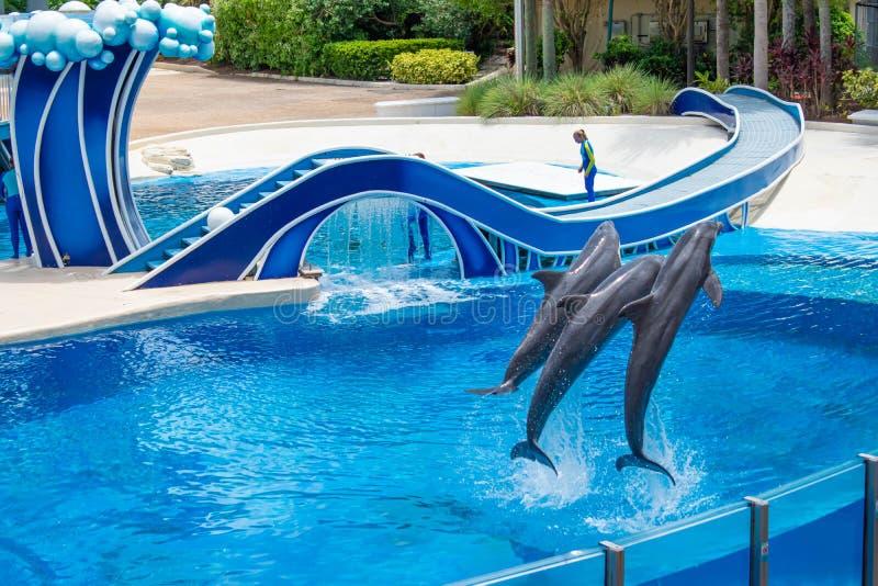 Os golfinhos que saltam em dias do golfinho mostram em Seaworld 1 foto de stock royalty free
