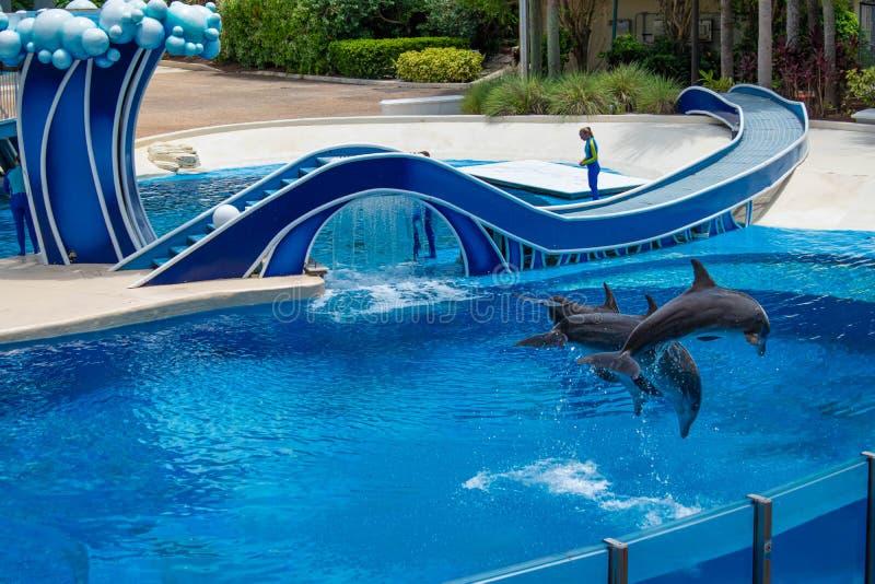 Os golfinhos que saltam em dias do golfinho mostram em Seaworld 3 fotos de stock royalty free