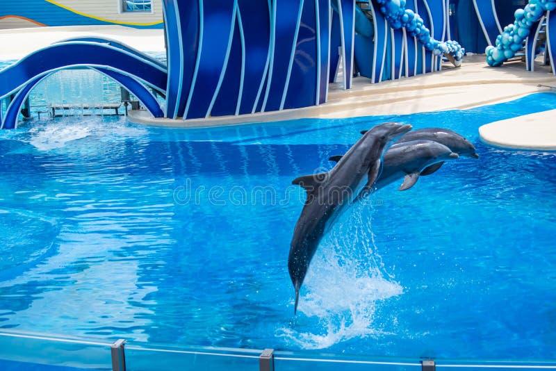 Os golfinhos que saltam em dias do golfinho mostram em Seaworld 5 imagem de stock royalty free