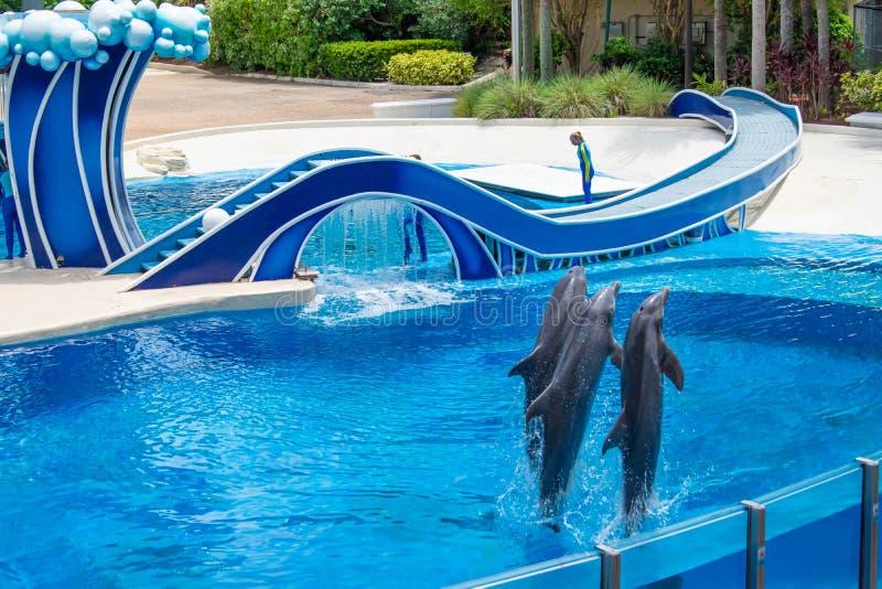 Os golfinhos que saltam em dias do golfinho mostram em Seaworld 8 fotografia de stock royalty free