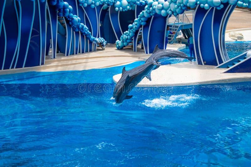 Os golfinhos que saltam em dias do golfinho mostram em Seaworld 10 fotos de stock