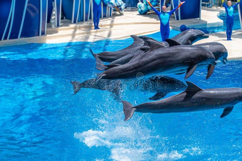 Os golfinhos que saltam em dias do golfinho mostram em Seaworld 29 imagens de stock royalty free