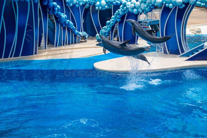 Os golfinhos que saltam em dias do golfinho mostram em Seaworld 13 fotografia de stock royalty free