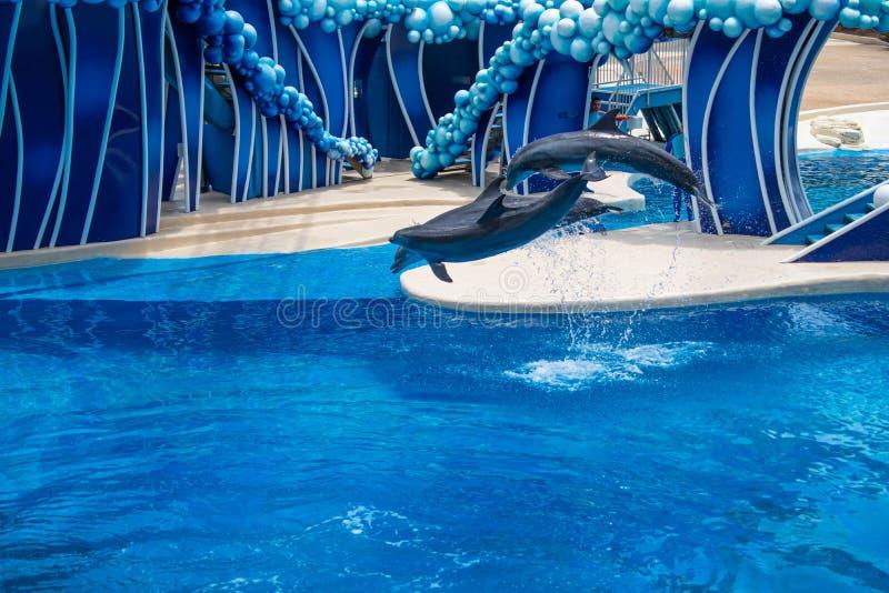 Os golfinhos que saltam em dias do golfinho mostram em Seaworld 9 fotografia de stock royalty free