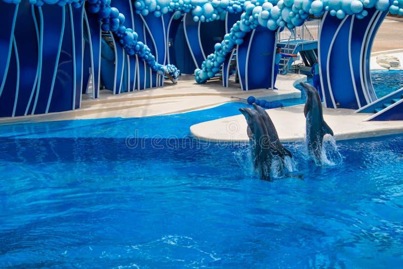 Os golfinhos que saltam em dias do golfinho mostram em Seaworld 11 imagens de stock royalty free