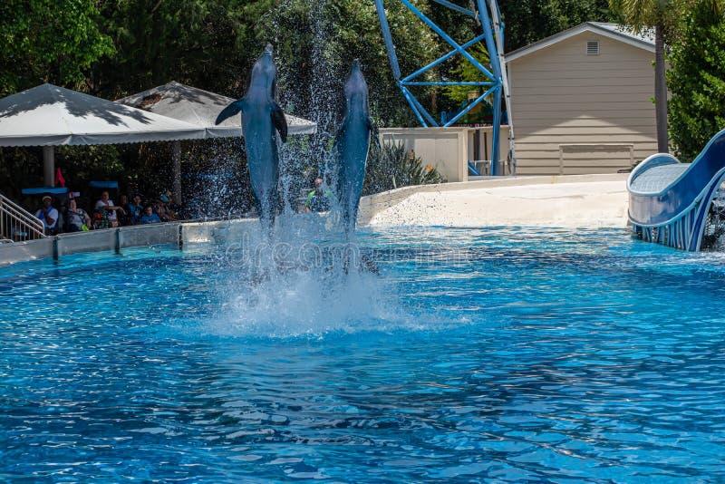 Os golfinhos que saltam em dias do golfinho mostram em Seaworld 27 fotografia de stock royalty free