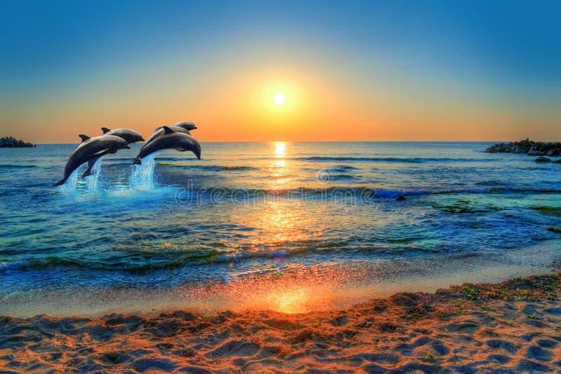 Os golfinhos que saltam no mar azul de Tailândia imagem de stock