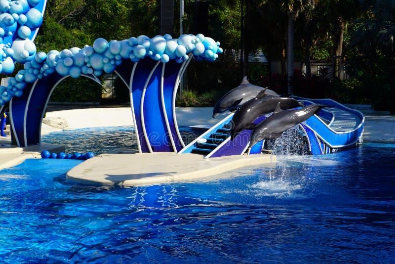 Os golfinhos que saltam no uníssono na água azul imagens de stock
