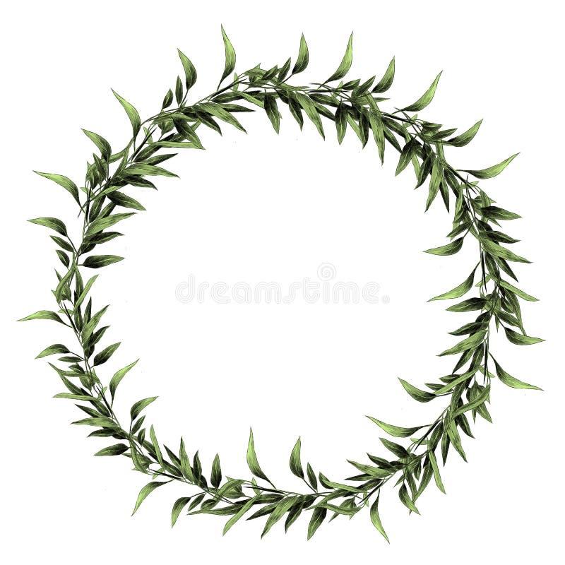 Os gráficos de vetor do esboço do ramo da folha do eucalipto ilustração do vetor