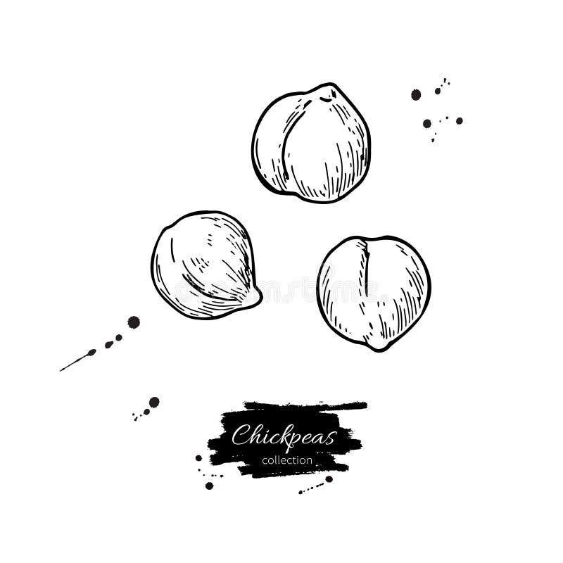 Os grãos-de-bico entregam a ilustração tirada do vetor Objeto gravado vegetal isolado do estilo ilustração royalty free