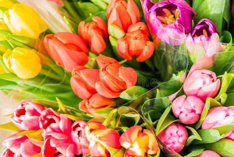 Os grupos coloridos das tulipas, close-up da mola bonita florescem imagem de stock