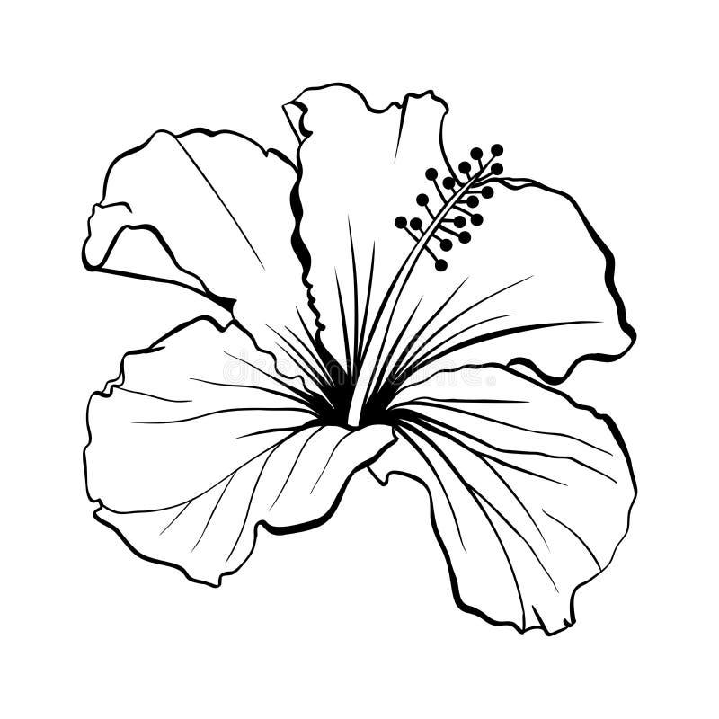 Os hibiscus havaianos esboçam o laser cortaram o vetor ilustração do vetor
