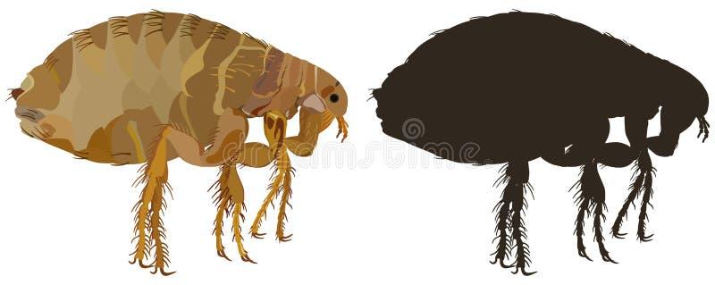 Os insetos de uma praga do pulga-inseto são parasita Ilustração do vetor ilustração royalty free