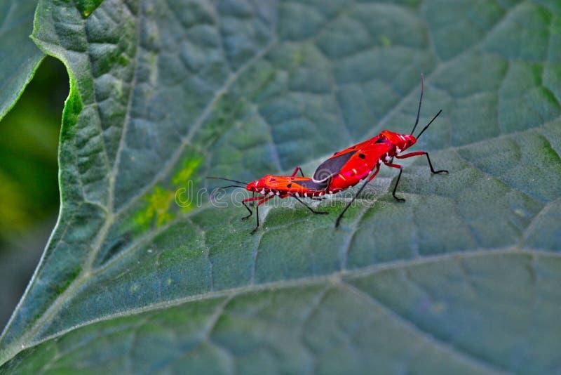 Os insetos múltiplos parte superior amam e dos afeições da planta do dedo das senhoras imagem de stock