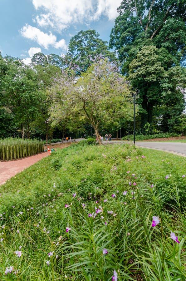 Os jardins botânicos de Singapura imagem de stock