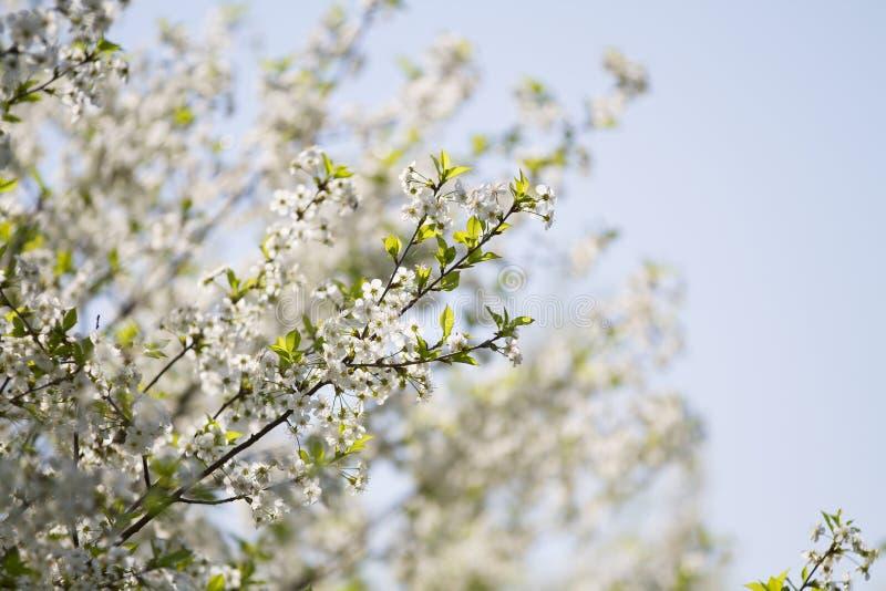 Os jardins de florescência imagem de stock royalty free