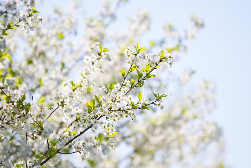 Os jardins de florescência foto de stock royalty free
