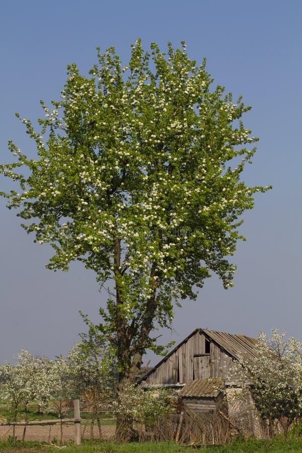 Os jardins de florescência fotografia de stock royalty free
