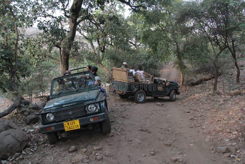 Os jipes do safari do turista na reserva da floresta de Ranthambhore estacionam imagem de stock royalty free