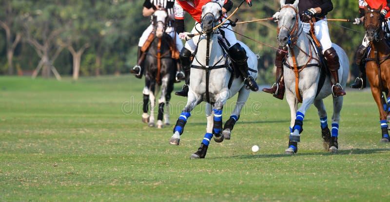 Os jogadores do polo do cavalo estão competindo no campo do polo foto de stock