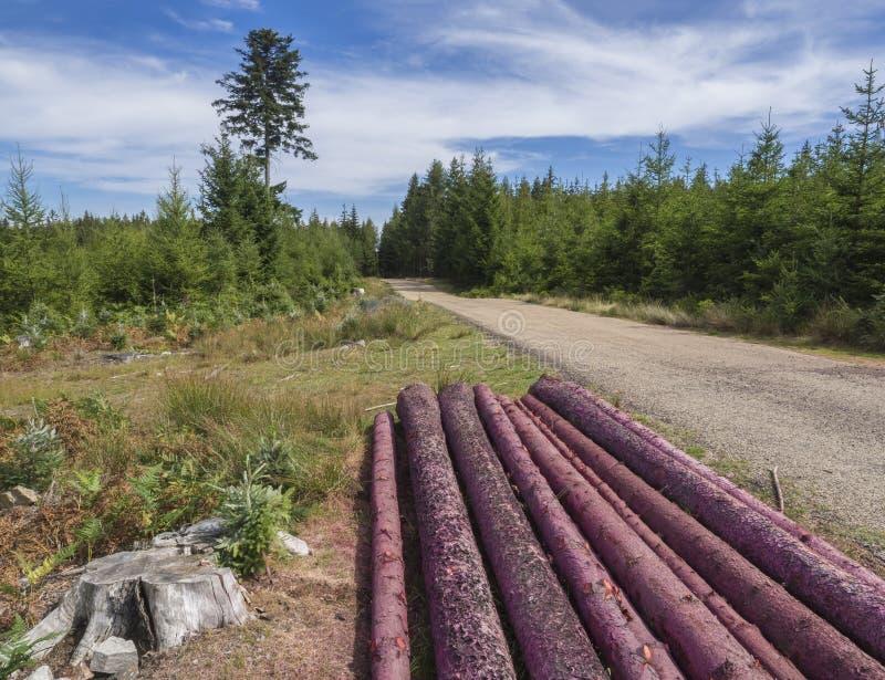 Os logs colhidos picam o tronco para a lenha que seca a estrada de floresta seguinte, árvores spruce verdes e fundo do céu azul fotografia de stock royalty free
