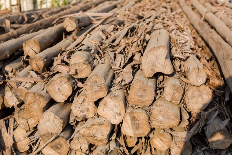 Os logs do eucalipto são usados na indústria da construção civil imagens de stock royalty free
