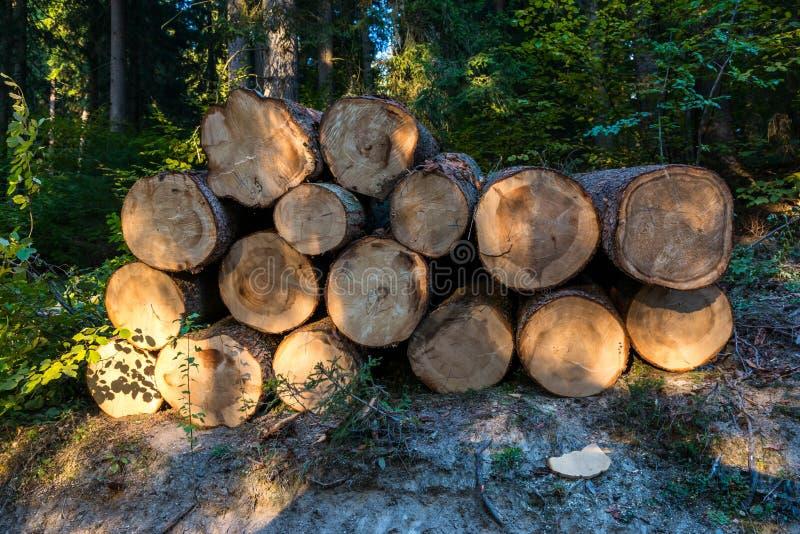 Os logs enormes do pinho fecham-se acima do tiro em Romênia fotos de stock