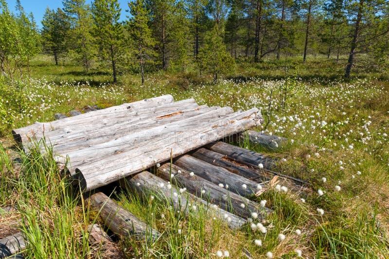 Os logs são empilhados em um pântano da floresta na ilha de Anzersky imagens de stock royalty free
