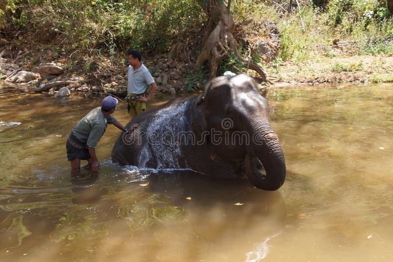 Os Mahouts lavam seu elefante imagem de stock