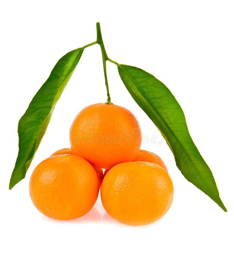 Os mandarino fotografia de stock royalty free