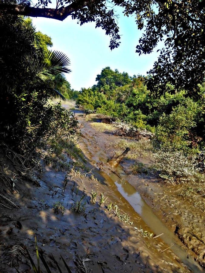 Os manguezais reflorestam imagens de stock royalty free