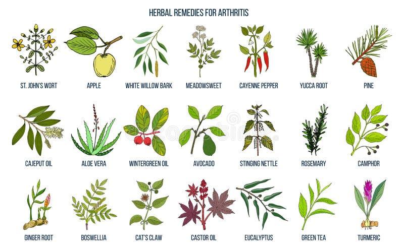 Os melhores remédios ervais para a artrite ilustração stock