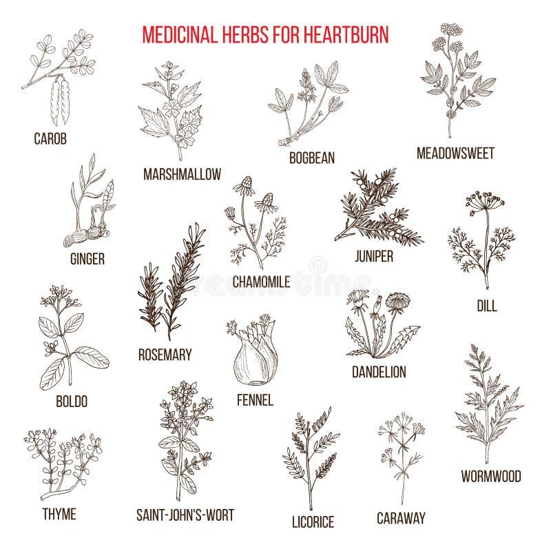 Os melhores remédios ervais para a azia ilustração stock
