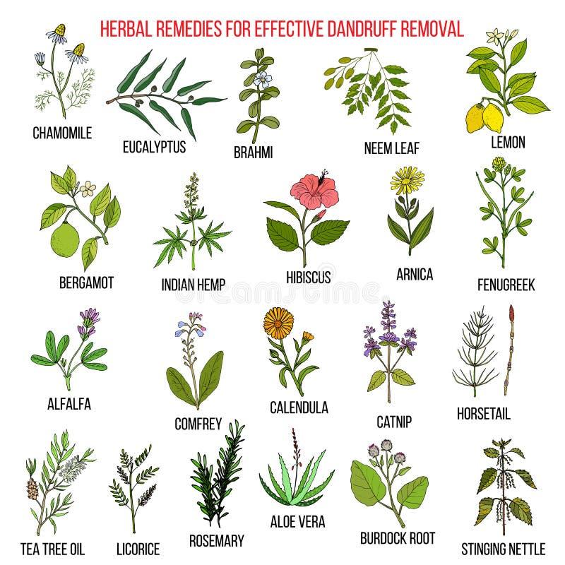 Os melhores remédios ervais para a remoção eficaz da caspa ilustração do vetor