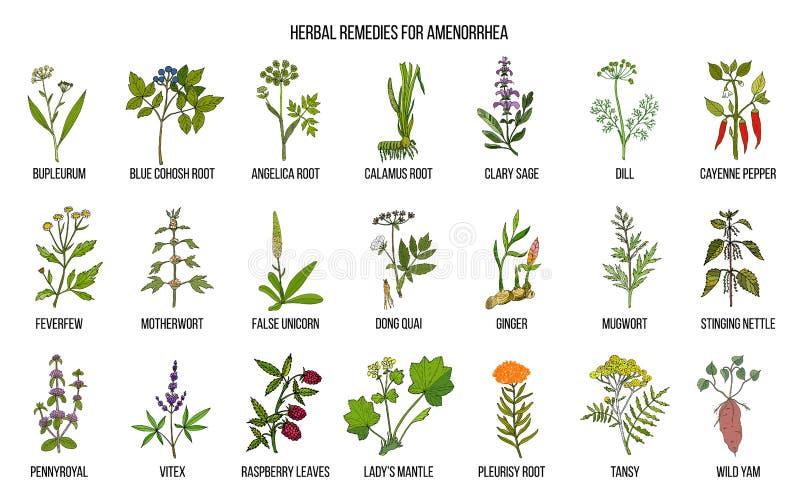 Os melhores remédios ervais para tratar o amenorrhea ilustração stock