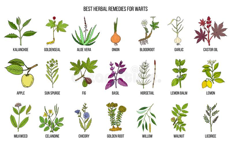 Os melhores remédios ervais para tratar verrugas ilustração do vetor