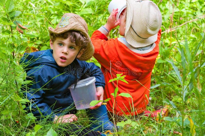 Os meninos comem bagas nas madeiras imagens de stock
