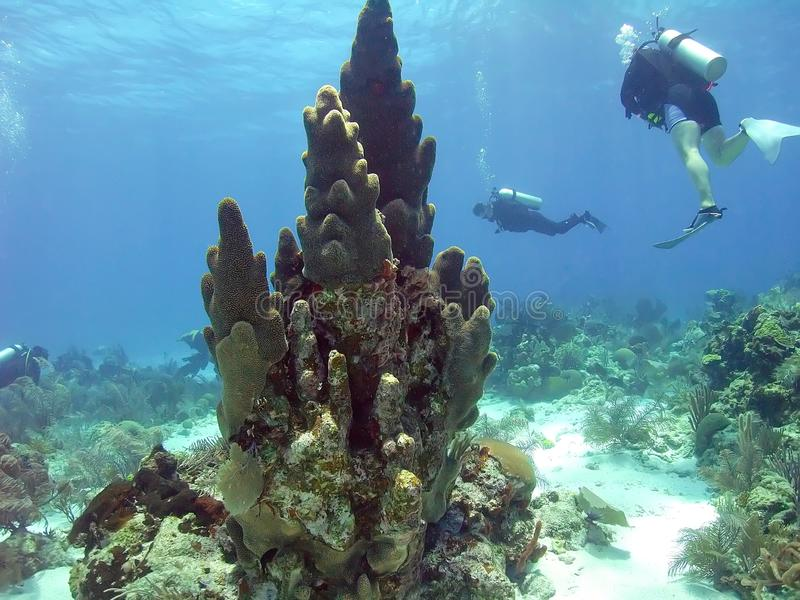 Os mergulhadores exploram o recife que cerca um coral da coluna imagem de stock