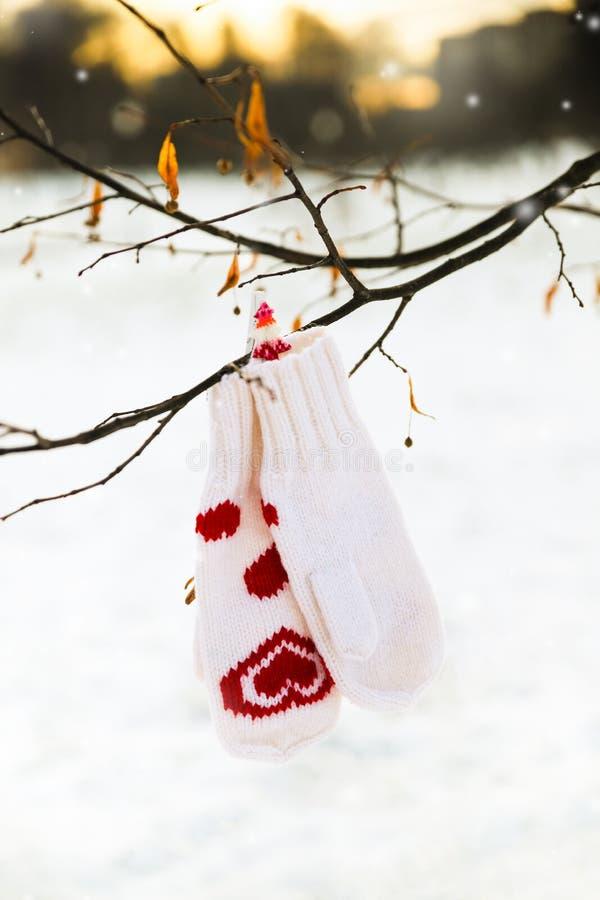 Os mitenes brancos com a decoração vermelha dos corações estão pendurando em um ramo de árvore imagens de stock royalty free