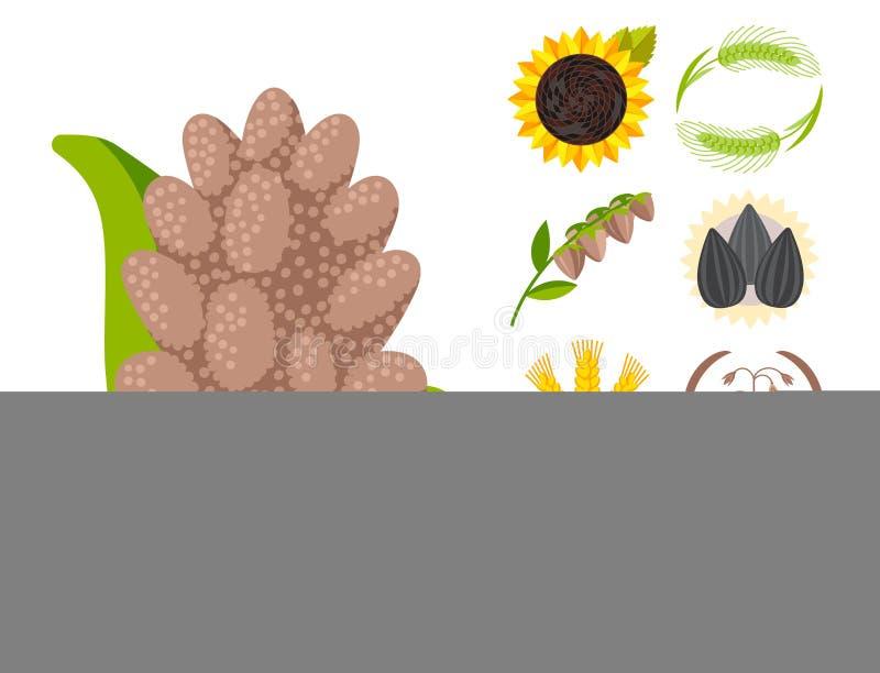 Os moldes do logotipo do vetor do crachá do produto da grão de sementes do cereal ajustaram a farinha orgânica granulado do papa  ilustração royalty free