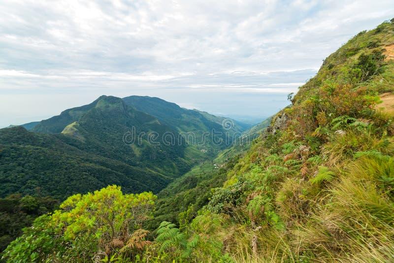 Os mundos da floresta da nuvem da paisagem das montanhas terminam em Horton Plains Na imagens de stock royalty free